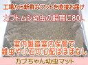 【九州工場直送】カブトムシ幼虫マット・カブちゃん幼虫マット 80L(カブトムシ幼虫用マット)「同梱不可」【売れ筋】11月2日から11月30日までポイント2倍