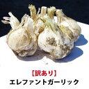 【平成30年度新物】青森県産 訳あり エレファントガーリック 1kg