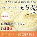 もち麦 5kg 白いもち麦 雑穀米 ダイエット 愛媛県産 国産 大麦