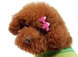 【メール便】♥CUTEなストライプリボン♥【2個セット】【犬用品・ペットグッズ・DOG】【smtb-MS】