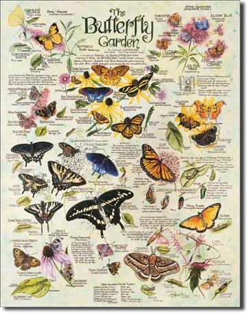 0983R.Lee Butterfly Garden蝶 バタフライ ガーデンアメリカン雑貨 ブリキ看板Tin Sign ティンサイン3枚以上で送料無料!