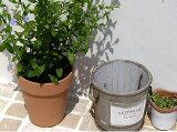 〜 落ち着いた感のある庭造りのを楽しんでみませんか? 〜 少し白みがかったテラコッタ製の植木鉢です。【直輸入だから低価格!】 イタリア製 テラコッタ アンティークトールポット 18