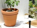 植木鉢 リムポット 42cm テラコッタ イタリア製 素焼き鉢 陶器鉢 大型 輸入鉢 デローマ社 園芸 ガーデニング おしゃれ 花の寄せ植えから花木・果樹まで 大きな鉢をご自宅まで
