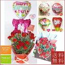 【遅れてごめんなさい】赤いカーネーション鉢花 &バルーン【母の日】【カーネーション】【バルーン フラワー】【送料無料】【母の日ギフト】