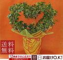 観葉植物 アイビー 【ヘデラ】 ハート 6号 【開店祝い】【新築祝い】【誕生日】【送料無料】【結婚祝い】