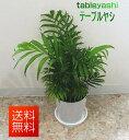 観葉植物 テーブルヤシ 5号 【開店祝い】【新築祝い】【誕生日】