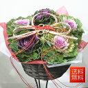季節の鉢花 寄せかご 【ラメ付き葉ボタン5個セット】...