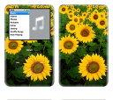 【お取寄せ】 iPod classic スキンシール DecalSkin [BF10/ひまわり] デコ シール デコシート 前面シール 背面シール ホイールカバーシ..