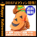 Pumpkin_dog_hw
