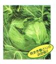 【キャベツ種子】 シティ 小袋(約160粒) (渡辺採種場) 秋まき春どりキャベツ種子【野菜の種】 【02P03Dec16】