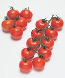 【野菜の種】【中玉トマト種子】フルティカ 小袋(20粒)(タキイ種苗)