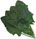 【ほうれん草種子】 グリーンホープ (カネコ種苗) プライミング種子M3万粒【野菜の種】