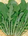 ハーブ 種/ロケット(オデッセイ)(サカタのタネ) 小袋 2.5ml 野菜の種 サカタ 種