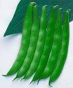 【つるなしインゲン種子】 【タキイ種苗】 つるなしモロッコ MF小袋