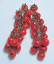 【ミニトマト種子】 【渡辺採種場】 CFプチぷよ ペレット1000粒