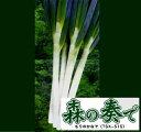 【葱種子】 森の奏で(TSX-515)葱 1dl(トキタ種苗) 【02P03Dec16】