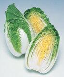 【野菜の種】【ミニ白菜種子】お黄にいり (タキイ種苗) ペレット種子100粒 [10P08Feb15]