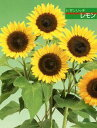 【ひまわり】 F1サンリッチレモン 1000粒 (タキイ種苗)【野菜の種】 【02P03Dec16】