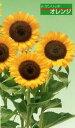 【ひまわり】 F1サンリッチオレンジ 1000粒 (タキイ種苗)【野菜の種】 【02P03Dec16】