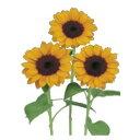 花の種【花種子】【サカタのタネ】【ひまわり】ビンセント1型(サカタのタネ) 100粒【サカタ 種】【花 種】 【02P03Dec16】