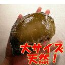 【送料無料】 活 天然蝦夷 アワビ 大サイズ 1Kg北海道産...