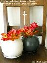 クラッスラ・火祭りパーフェクトサークル2セットインテリア/観葉植物/多肉植物/鉢植えギフト/誕生日/