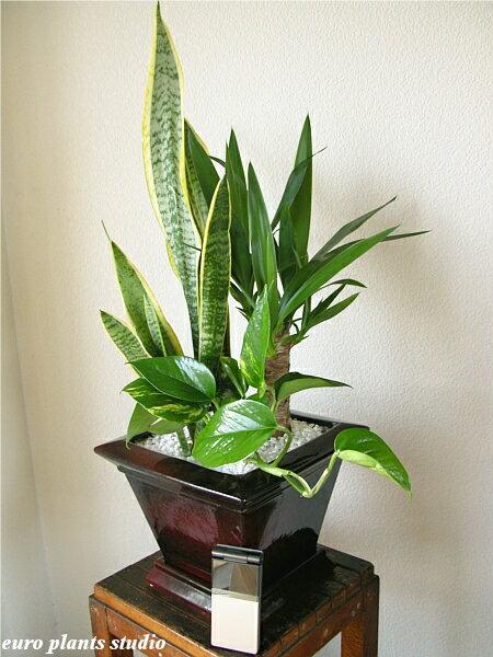 Auc eps rakuten global market e p s original mix plants for Design of ornamental plants