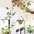 【ねじねじ枝ロング】いなざうるす屋 壁飾り イミテーショングリーン 壁掛けインテリア 観葉植物 ウォールデコレーション フェイクグリーン 緑 インテリア 観葉植物 緑 イミテーショングリーン 引越し 祝い ギフト 一人暮らし 癒し