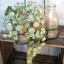 【いなざうるす屋 フェイクグリーン】ユキノシタ 壁飾り 壁掛けインテリア 観葉植物 ウォールデコレーション 緑 壁掛け インテリア イミテーショングリーン 模様替え 癒し プレゼント 引越し 一人暮らし 祝い ギフト