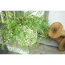 【いなざうるす屋 フェイクグリーン】アジアンタム 壁飾り 壁掛けインテリア 観葉植物 ウォールデコレーション 緑 壁掛け インテリア イミテーショングリーン 模様替え 癒し プレゼント 引越し 一人暮らし お祝い おしゃれ 可愛い