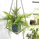 【いなざうるす屋 フェイクグリーン】シダシダミックス 壁飾り 壁掛けインテリア 観葉植物 ウォールデコレーション 緑 壁掛け インテリア イミテーショングリーン 模様替え 癒し プレゼント 引越し 一人暮らし お祝い おしゃれ 可愛い
