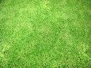ぷらんぷちぃくす 芝生でゴロン クローバー トリックプリント...