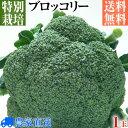 【特別栽培】良品厳選! ブロッコリー 1玉(Lサイズ以上)【減農薬・減化学肥料栽培】