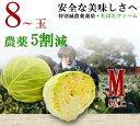【特別栽培】【業務用】 キャベツ 1箱(M〜Lサイズ、8〜12玉)注文後、収穫!サラダに 大玉キャベツ【減農薬・減化学肥料栽培】