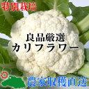 【特別栽培】良品厳選! カリフラワー 1玉(Мサイズ以上)【減農薬・減化学肥料栽培】
