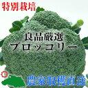 【業務用】【特別栽培】良品厳選!ブロッコリー12玉(Lサイズ)【減農薬・減化学肥料栽培】