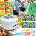 【電源・水道不要】ソーラー 自動 灌水器 水やり花子