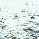 【全商品ママ割メンバーP5倍 6.18 9:59迄】秦義之 ファブリックパネル 水面 アートパネル Yoshiyuki Hata Mサイズ 30cm×30cm lib-4122296s1 北欧 送料無料 クーポン プレゼント 通販 後払い 新生活 オススメ %off ジェンコ 【RCP】 北欧 モダン インテリア ナチュラ