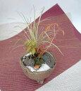 季節の苔 創作 寄植え小鉢シリーズ(足付き和鉢)【寄せ植え】