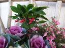 ヤブコウジ 3号 実付 苗 縁起の良い古典園芸植物 赤い実 お正月の寄せ植えアイテム 10P03De