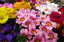 プリムラジュリアン3.5号♪色とりどりの花が可愛らしい サクラソウ科 多年草 販売 通販 種類