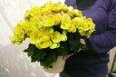 リーガースベコニア コスモノア5号鉢植え♪色鮮やかな幸運色 鉢花 販売 通販 種類【10P05Apr14M】