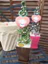 クリスマスツリー♪グリーンネックレスツリー4号鉢植え【観葉植物】【グリーンネックレス】【多肉植物】