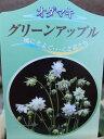 開花見込み株 オダマキ グリーンアップル苗 花苗 庭でも楽しめる丈夫な宿根草