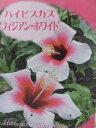 ハイビスカス フィジアン ホワイト 花苗 ハイビスカス 地球が育てた自然のままの珍しいハイビスカス苗