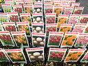 プレミアムチューリップ 芽出し 5株セット チューリップ苗 珍しい品種が勢ぞろい カラフル