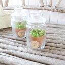 食虫植物 セファロタス フォリキュラリス レア食虫植物 2号 ポット苗 プラントBOX付 フクロユキノシタ