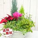 送料無料 ★ クリスマス寄せ植え20株セット クリスマス時期の定番、ポインセチア、ガーデンシクラメン、コニファーは必ず入ります 花苗 販売 通販 種類