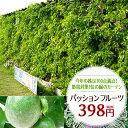 パッションフルーツ苗 緑のカーテン グリーンカーテン 時計草 夏の節電対策に トケイソウ 日よけ