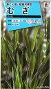 オール1割引き!花の種 むぎ 笹の雪 8ml タキイ交配